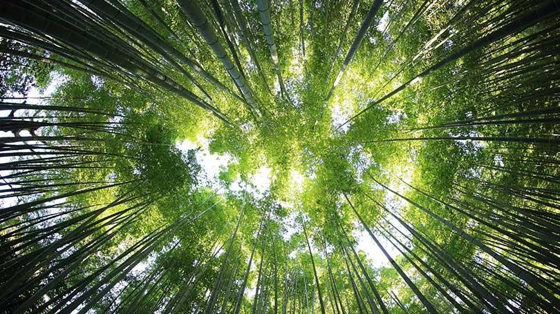 los árboles no detendrán el cambio climático